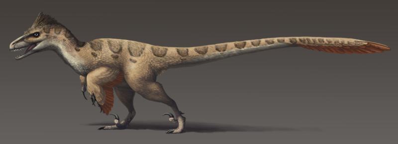 800px-Utahraptor_ostrommaysorum_update2
