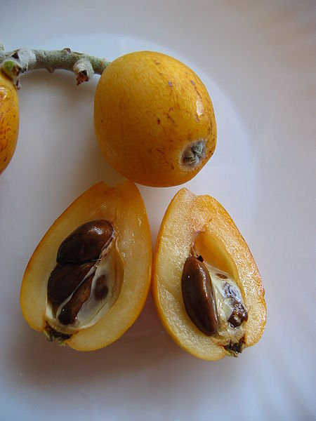 I didn't even know what a loquat was prior to writing this. (Picture source.)