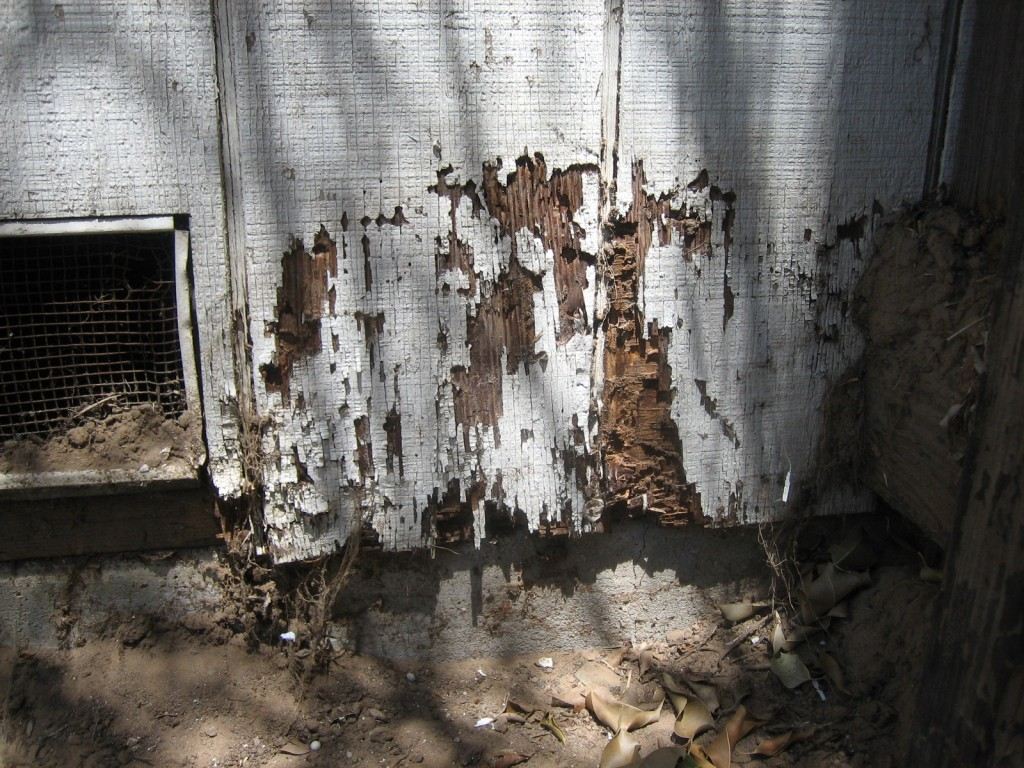 "May all your dwellings look like this, jerk. ""Termite damage"" by Alton - Own work. Licensed under CC BY-SA 3.0 via Wikimedia Commons."
