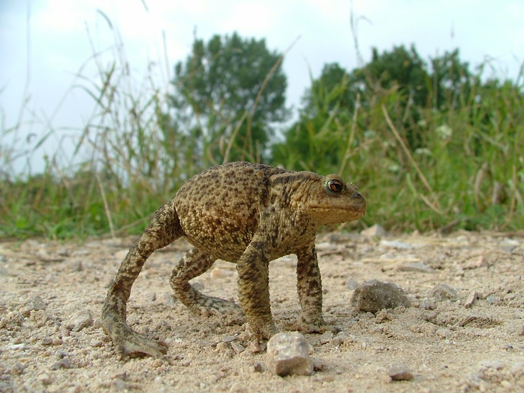 I'm also sorry that toads think that this posture is the scariest thing ever. (Photo by Łukasz Olszewski.)