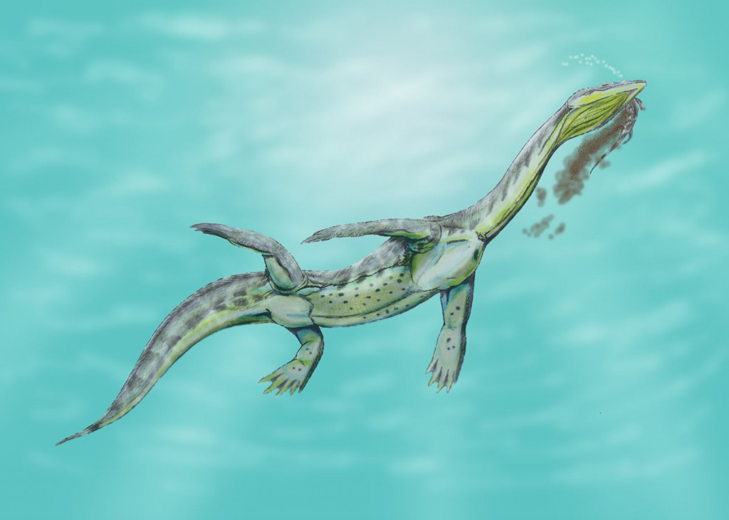 Ceresiosaurus, a nothosaur.