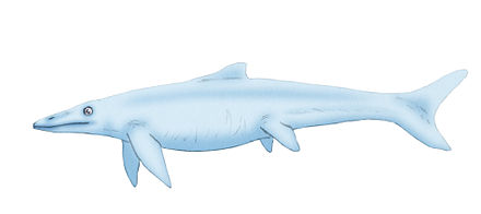 The sharklike Hudsonelphida had a reduced pelvis like early whales. (Art by)