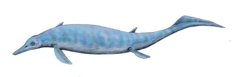 Chaohusaurus, an early ichthyosaur.