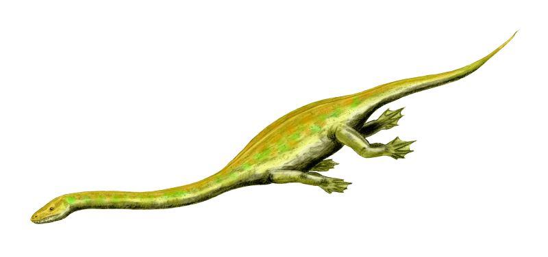 Dinocephalosaurus.