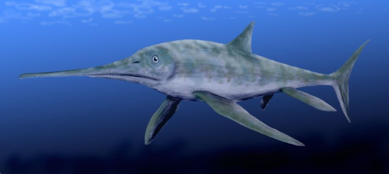 Long-nosed Eurhinosaurus likely occupied a similar niche to modern marlins or saw-toothed sharks. (Art by Nobu Tamura.)