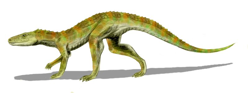 I kid you not, crocodiles evolved from something like Hesperosuchus here. (Art by Nobu Tamura yet again.)