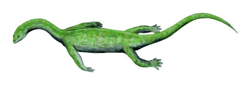 Keichosaurus, a Pachyplesiosaur.