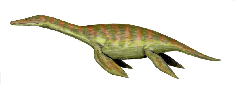 Macroplata, an early plesiosaur. (Art by Nobu Tamura.)