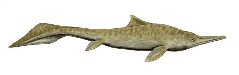 Mixosaurus, a fishlike ichthyosaur.
