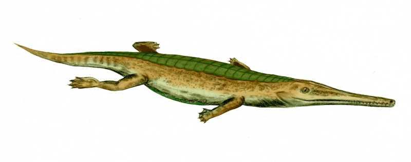 Pelagosaurus, a gharial-like