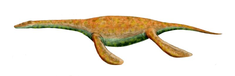 Pistosaurus was one of the first marine reptiles with four flippers! (Art by Nobu Tamura.)