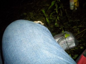 A caterpillar, species unknown, dropped from a silken line onto my knee. I set it down in the grass.