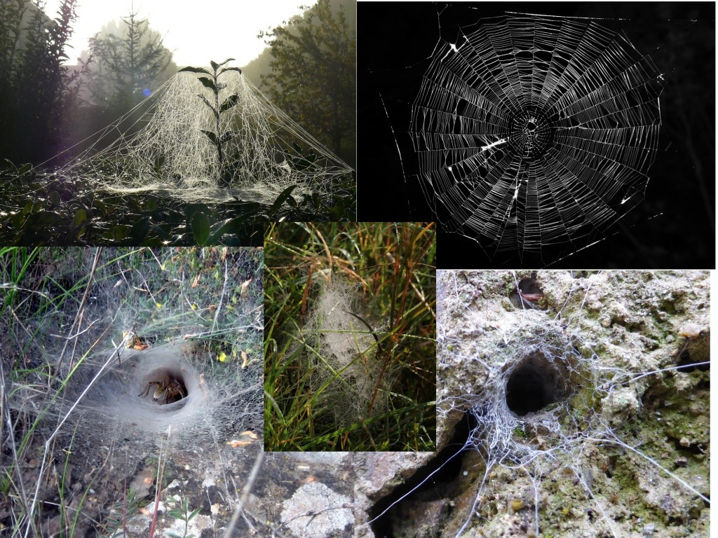 The five basic spider web types. Top left: sheet web. Top right: spiral orb web. Center: tangle web or cobweb. Bottom left: funnel web. Bottom right: tubular web.