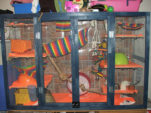 A much more suitable use of space for a rat enclosure than the open-field environment used for testing in the video above. Note how the use of vertical climbing areas increases the amount of space exponentially.