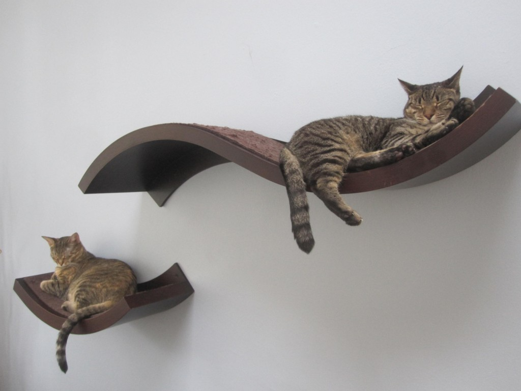 """Cat shelves"" are becoming more popular as a way for cat owners to allow their pets to utilize vertical space."