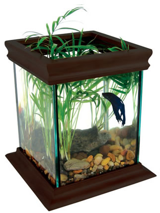 Beyond the bars ethical enclosures for captive animals for Big betta fish tank