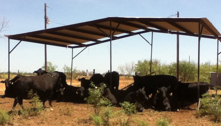 Cattle utilizing some artificial shade. (Photo source.)