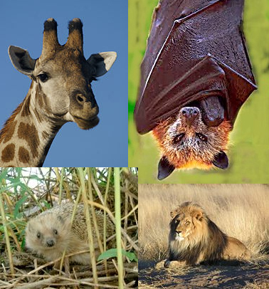 Bats and their closest living relatives... really.