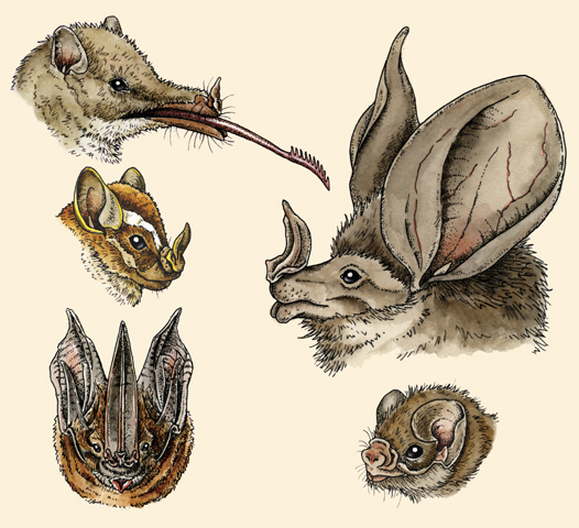 A carefully curated selection of leaf-nosed bats.